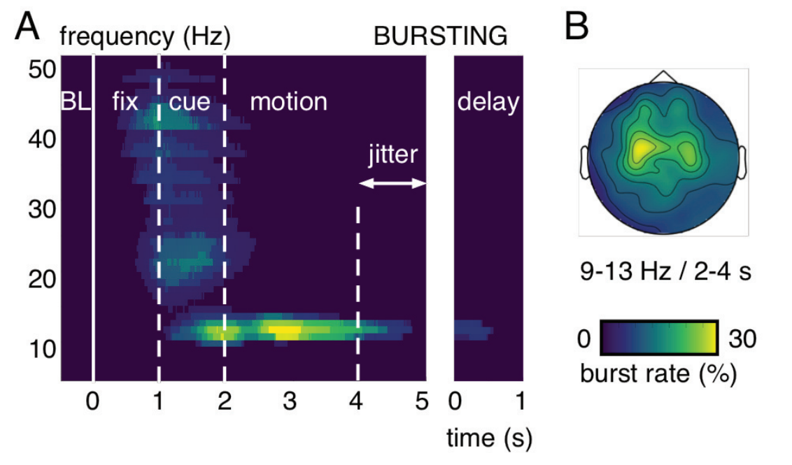 Oscillatory bursts in parietal cortex reflect dynamic attention between multiple objects and ensembles