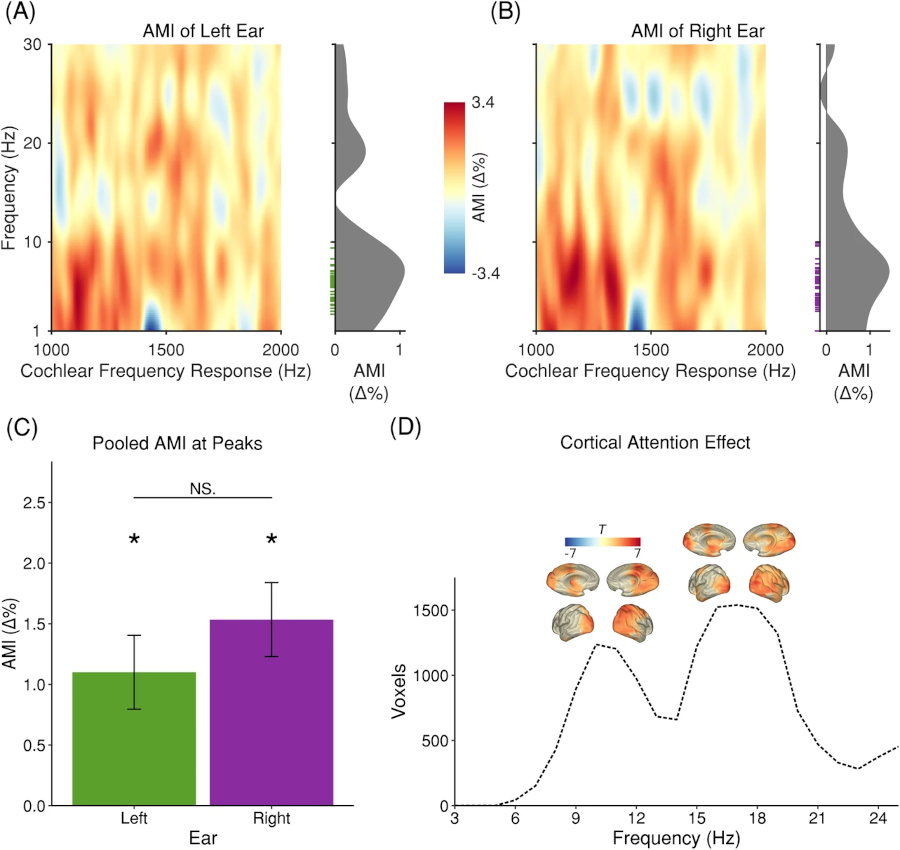 Cochlear activity in silent cue-target intervals shows a theta-rhythmic pattern and is correlated to attentional alpha and theta modulations