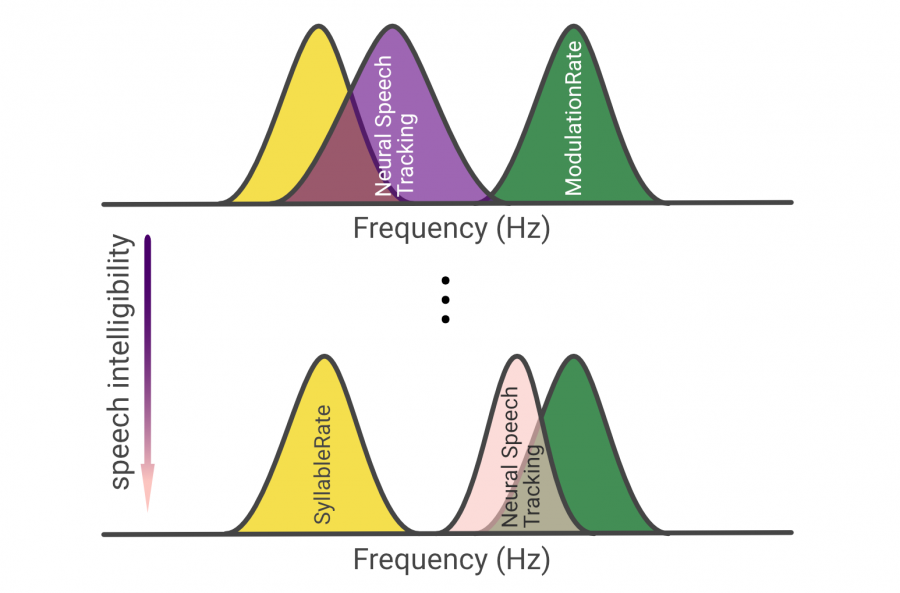 New preprint: Neural speech tracking shifts from the syllabic to the modulation rate of speech as intelligibility decreases